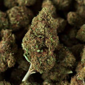 Les Fleurs Du Bien cbd cannabis light legale