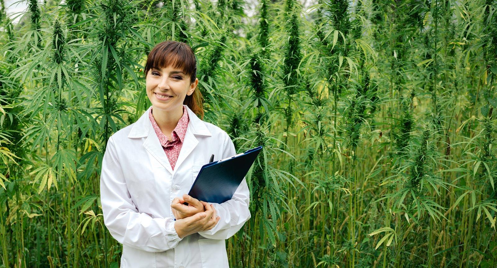 Marijuana legale online cbd