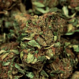 queen mother cannabis light cannabis legale