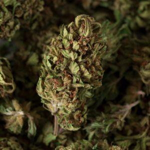 bouquet n5 cbd cannabis light
