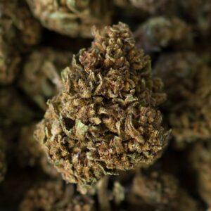 lemon blossom cbd cannabis light